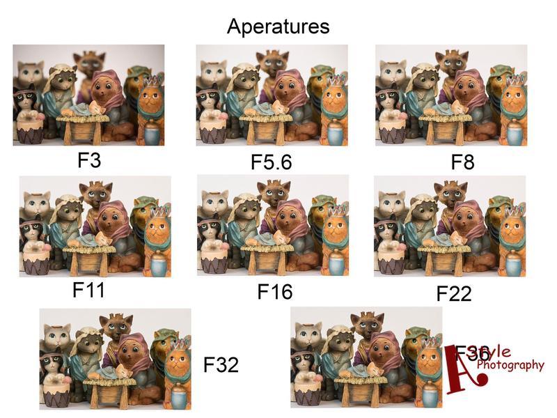 MacroPhotography-Holiday-14