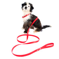 Dog Leash Dogs