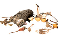 7-17NaturalCatToy-2865-3548