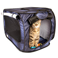 Cat Tent Group 3