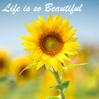 Sunflower-Quotes-17
