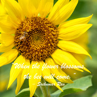 Sunflower-Quotes-18