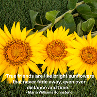 Sunflower-Quotes-1592