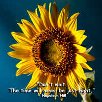 Sunflower-Quotes-1596